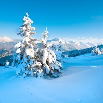 Zimowa szadź i pokryte śniegiem jodły na zboczu góry (karpaty, ukraina)