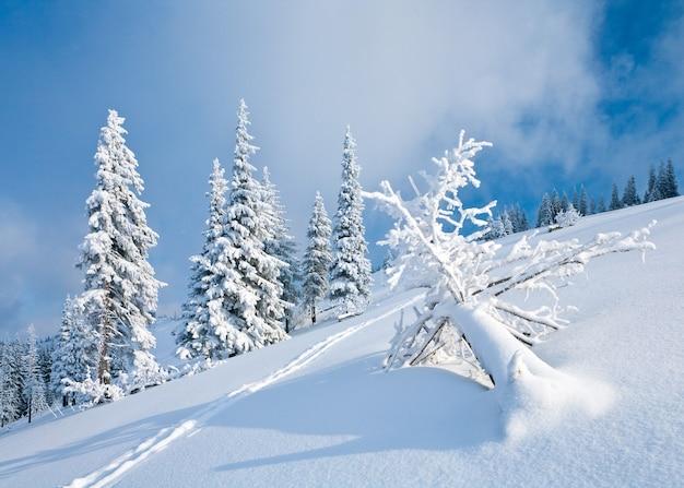 Zimowa szadź i pokryte śniegiem jodły na zboczu góry na zachmurzonym tle nieba