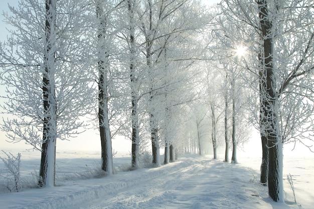 Zimowa wiejska droga wśród oszronionych drzew podświetlona przez wschodzące słońce