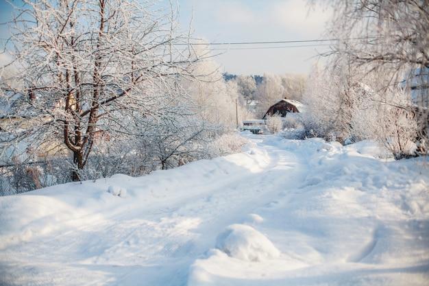 Zimowa wiejska scena, zaśnieżona droga i drzewa pokryte śniegiem