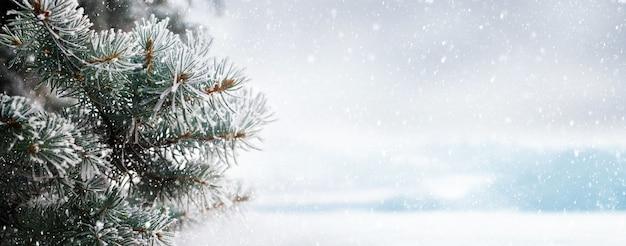 Zimowe boże narodzenie tło z oszronionymi gałęziami świerkowymi na rozmytym tle podczas opadów śniegu