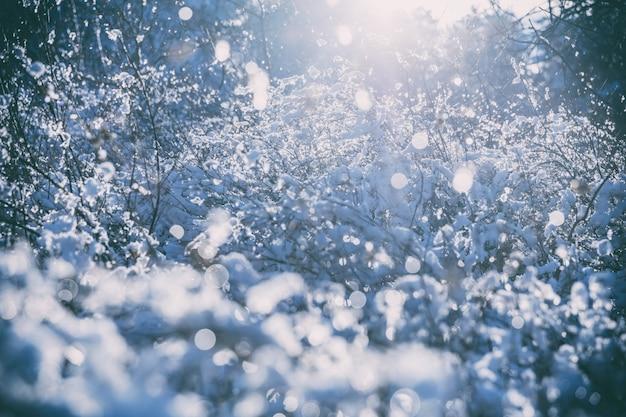 Zimowe drzewa, gałęzie w śniegu i mróz zbliżenie.