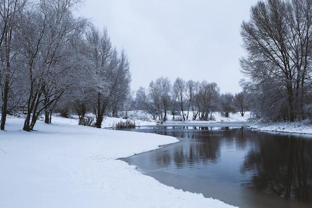 Zimowe drzewa odbite w wodzie