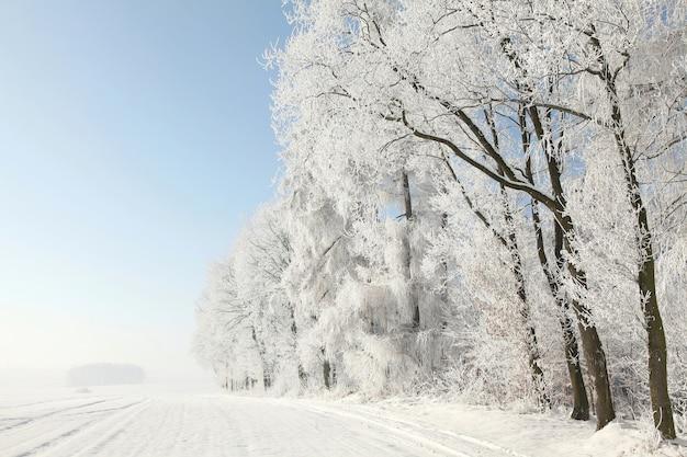 Zimowe drzewa stojące w polu o świcie