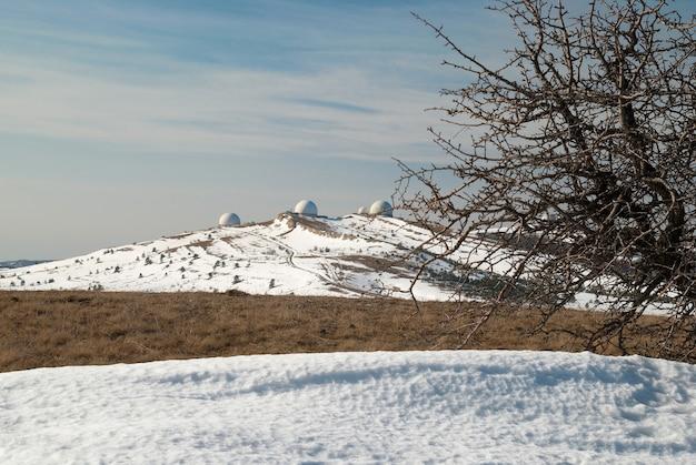 Zimowe drzewa w górach.