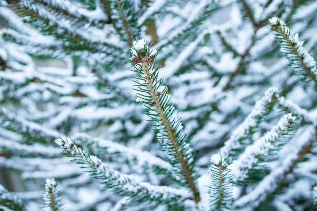 Zimowe drzewo na powierzchni parku