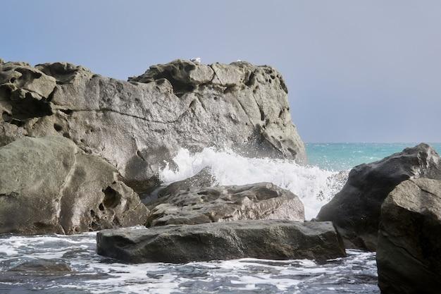 Zimowe fale morskie między przybrzeżnymi skałami z siedzącymi na nich mewami
