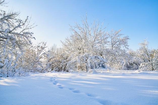 Zimowe gałęzie z dużą ilością śniegu