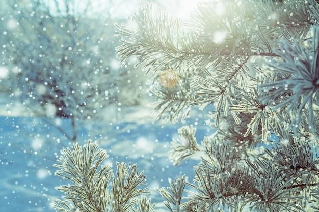 Zimowe naturalne tło gałęzi drzew w szron z promieni słonecznych