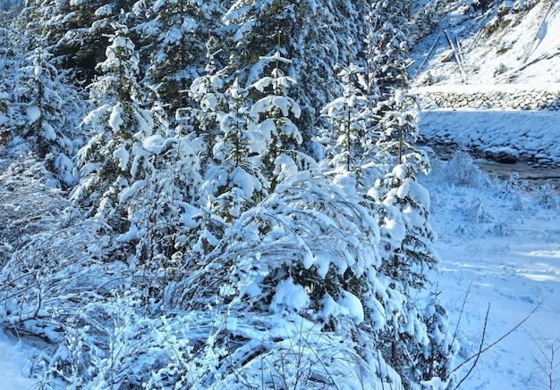 Zimowe ośnieżone krzewy i drzewa oraz mały strumyk.