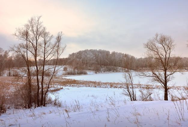Zimowe pole w godzinach porannych. nagie drzewa wśród zasp śniegu, las na horyzoncie
