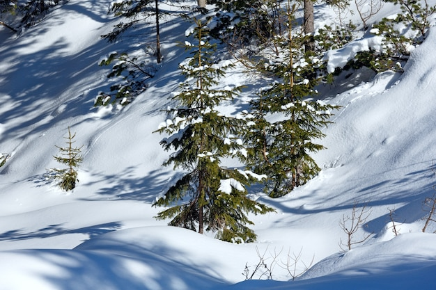 Zimowe śnieżne górskie wzgórze z zaspami śnieżnymi i małymi jodłami.