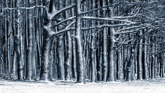 Zimowe tło z ośnieżonymi drzewami w lesie