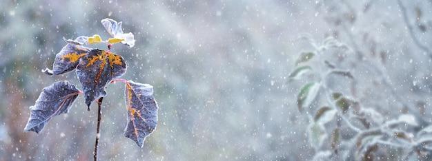 Zimowe tło z suchymi liśćmi na gałęziach drzew podczas opadów śniegu, ogród zimowy