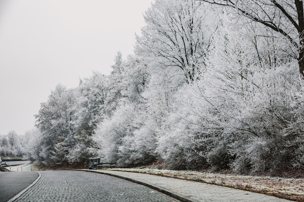 Zimowy dzień w monachium