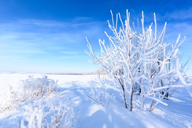 Zimowy krajobraz. białe pole śniegu, błękitne niebo, drzewa pokryte szronem. widok panoramiczny.