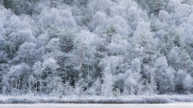 Zimowy krajobraz, chłodny listopadowy poranek, białe mroźne drzewa.