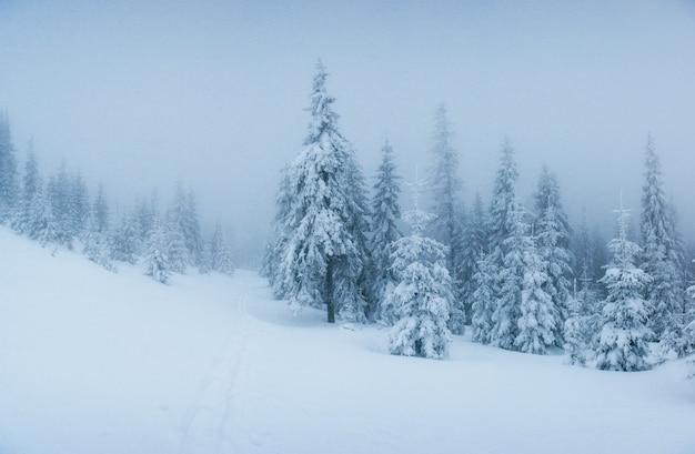 Zimowy krajobraz drzew w mróz i mgle.