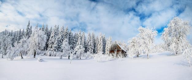Zimowy krajobraz drzew w mróz