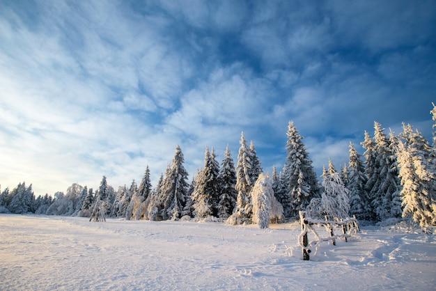 Zimowy krajobraz drzew w śniegu