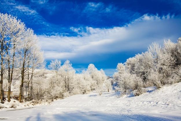 Zimowy krajobraz - drzewa nad rzeką i błękitne niebo