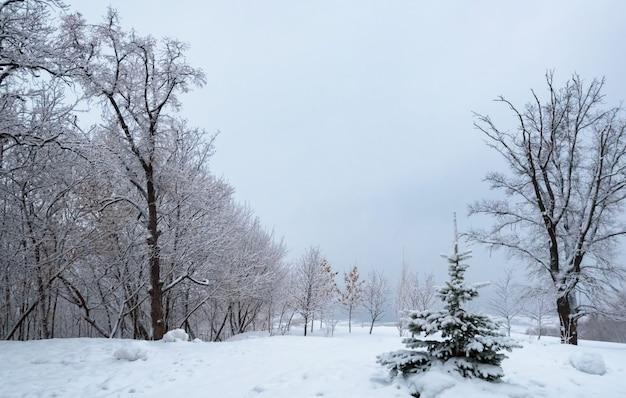 Zimowy krajobraz, drzewa w śniegu w pobliżu zamarzniętej rzeki po ulewnym śniegu