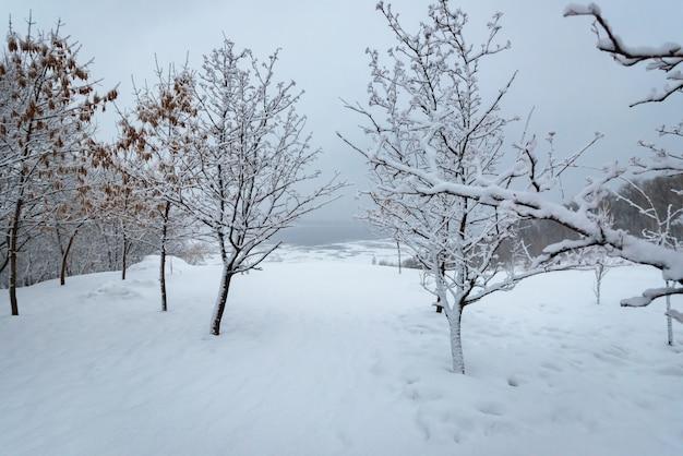 Zimowy krajobraz, drzewa w śniegu w pobliżu zamarzniętej rzeki po ulewnym śniegu.