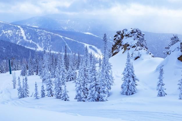 Zimowy krajobraz, drzewa w śniegu