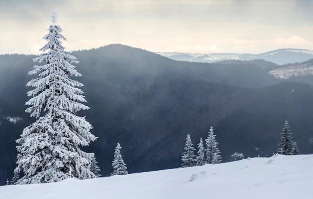Zimowy krajobraz górski ze śniegiem pokryte sosnami