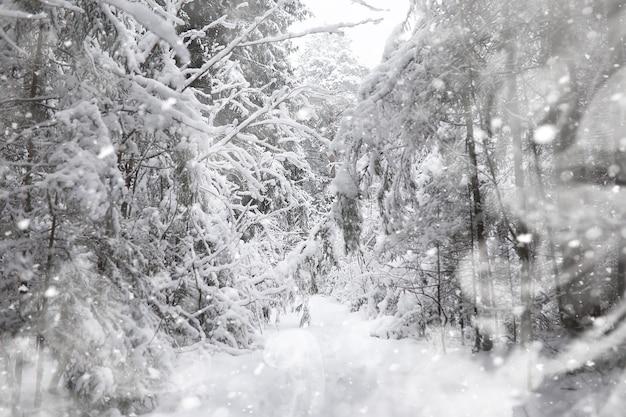 Zimowy krajobraz. las pod śniegiem. zima w parku.