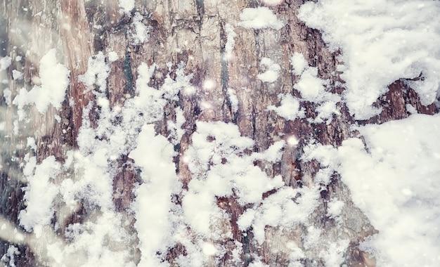 Zimowy krajobraz lasu. wysokie drzewa pod pokrywą śnieżną. styczniowy mroźny dzień w parku.