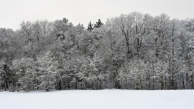 Zimowy krajobraz - mroźne drzewa. natura ze śniegiem. piękne sezonowe naturalne tło.