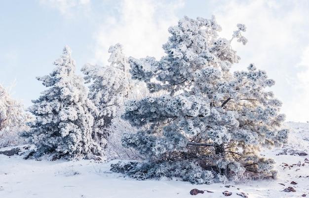 Zimowy krajobraz na szczycie góry z ośnieżonymi drzewami
