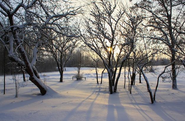 Zimowy krajobraz na wsi na łotwie, w europie wschodniej.