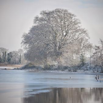 Zimowy krajobraz nad jeziorem. drzewa pokryte szronem w środkowej irlandii