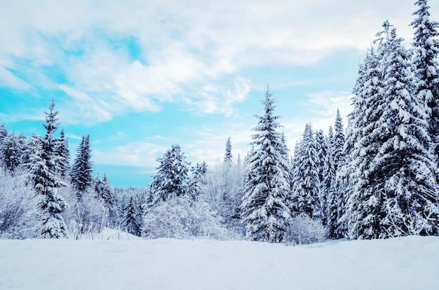 Zimowy krajobraz: ośnieżone drzewa iglaste na tle niebieskiego nieba.
