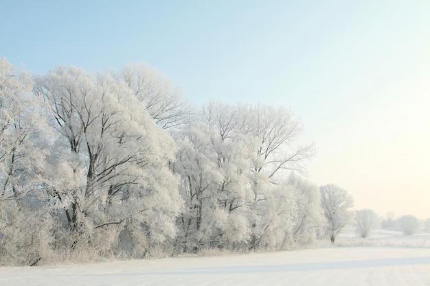 Zimowy krajobraz, oszronione drzewa o świcie