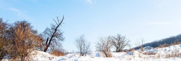 Zimowy krajobraz, panorama, z gołymi drzewami na zaśnieżonej powierzchni przy słonecznej pogodzie