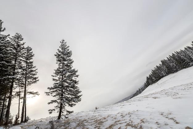 Zimowy krajobraz pełen śniegu