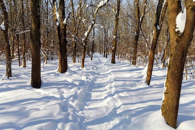 Zimowy krajobraz. piękny szlak w snowparku lub lesie.