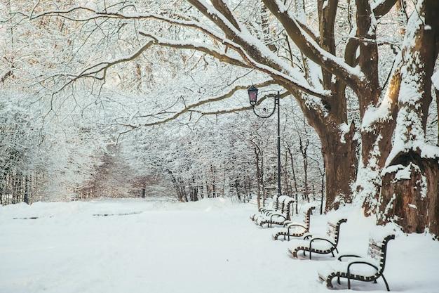 Zimowy krajobraz, pokryte śniegiem drzewa i ławki w parku