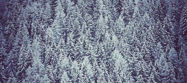 Zimowy krajobraz w lesie, panorama, alpy, francja