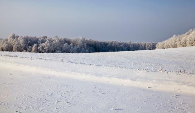 Zimowy krajobraz w polu ze śniegiem