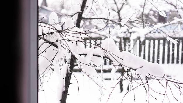 Zimowy krajobraz widziany przez okno. gałęzie drzewa pod śniegiem w mroźny poranek, ogrodzenie w tle
