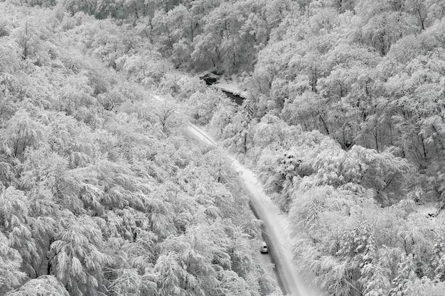 Zimowy krajobraz z drogą w lesie