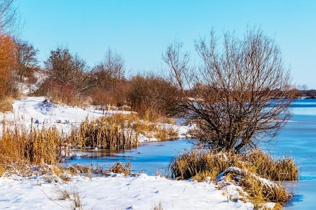 Zimowy krajobraz z drzewami i suchymi trzcinami nad rzeką