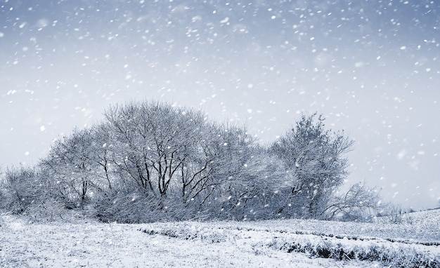Zimowy krajobraz z drzewami podczas obfitych opadów śniegu