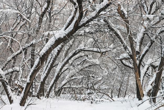 Zimowy krajobraz z drzewami pokryte śniegiem