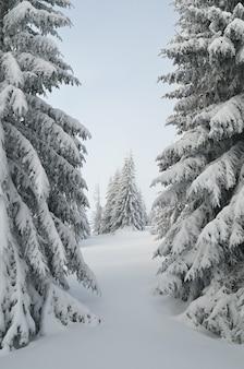 Zimowy krajobraz z drzewami pokrytymi śniegiem
