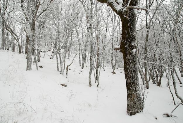 Zimowy krajobraz z drzewami w śniegu